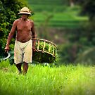 Balinese Rice Farmer by Angie Muccillo