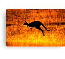 Kangaroo Sunset Canvas Print