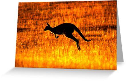 Kangaroo Sunset by naturalnomad