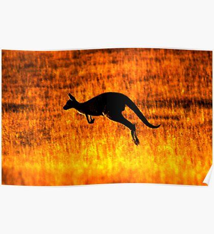 Kangaroo Sunset Poster