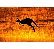 Kangaroo Sunset Photographic Print