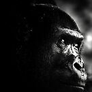 My portrait session with a primate by sashdc