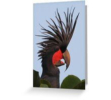 Bad Hair Day - Palm Cockatoo Greeting Card
