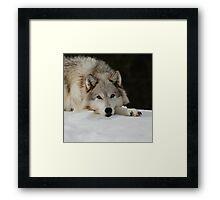 Winters Grey Framed Print