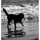 Spoodle and Seaweed by Gozza