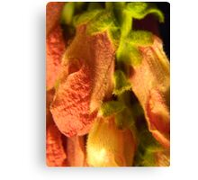 Furry Snap Dragons Canvas Print