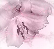 Pink Lily card by walstraasart