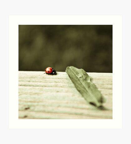 Ladybird. Art Print