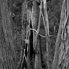 Scary Trees- Wotton Scrub Creek by Ben Loveday