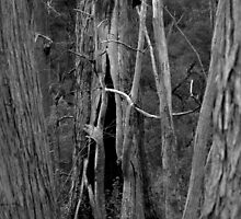 Scary Trees- Wotton Scrub Creek by Ben Loveday