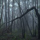 Fog in Horsnell Gully by Ben Loveday