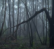 Fog in Horsnell Gully by Ben Loveday