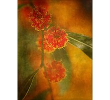 Explosion Of Nature.... Photographic Print