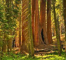 Path to Sequoias by Adam Bykowski