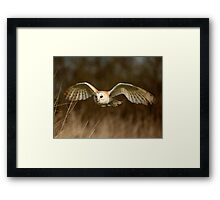 Barn Owl Flight  ( Tyto alba ) Framed Print