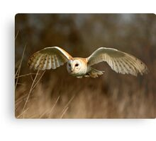 Barn Owl Flight  ( Tyto alba ) Metal Print