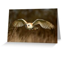 Barn Owl Flight  ( Tyto alba ) Greeting Card