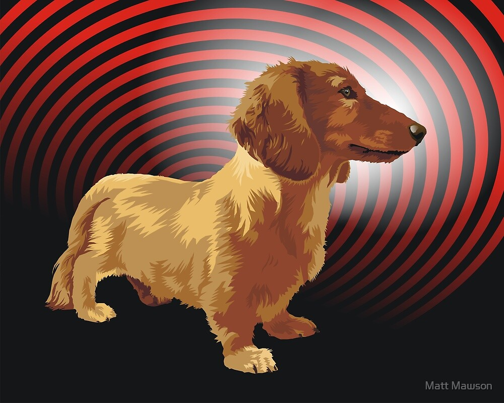 George dachshund by Matt Mawson