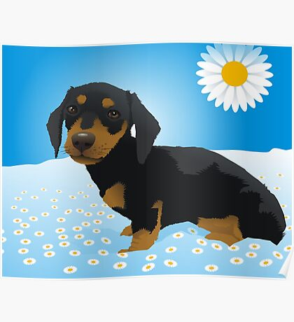 Daisy dachshund Poster