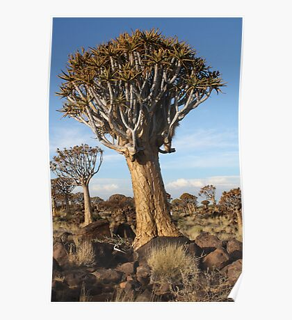 Quiver tree on rock - South Namibia Poster