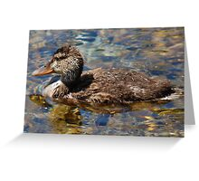 Ugly Duckling Greeting Card