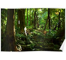 Native New Zealand Forest Poster
