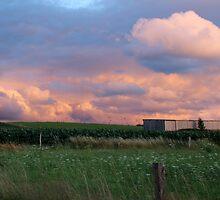 Summer Evening by karina5