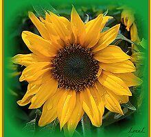 Sunshine by LynnL