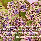 Hydrangea Hues by sarnia2