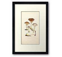 Coloured figures of English fungi or mushrooms James Sowerby 1809 0073 Framed Print