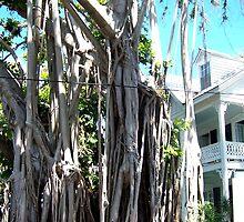 Banyon Tree in Key West by John Carpenter
