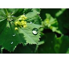 Rain drop Photographic Print