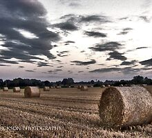 The life of Bales by Paul Hickson