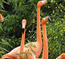 Flamingo  by angeljootje