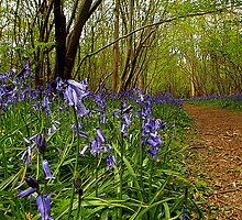 Foxley Wood Reserve by Norfolkimages
