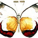 Delias mysis (Union Jack Butterfly) by Carol Kroll