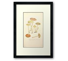 Coloured figures of English fungi or mushrooms James Sowerby 1809 0251 Framed Print