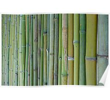 Green bamboo fence background Poster
