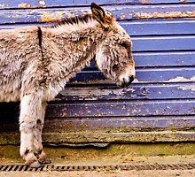 Lonely donkey by Paul Jarrett