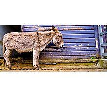 Lonely donkey Photographic Print
