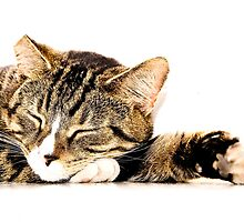 Tabby cat asleep by Paul Jarrett