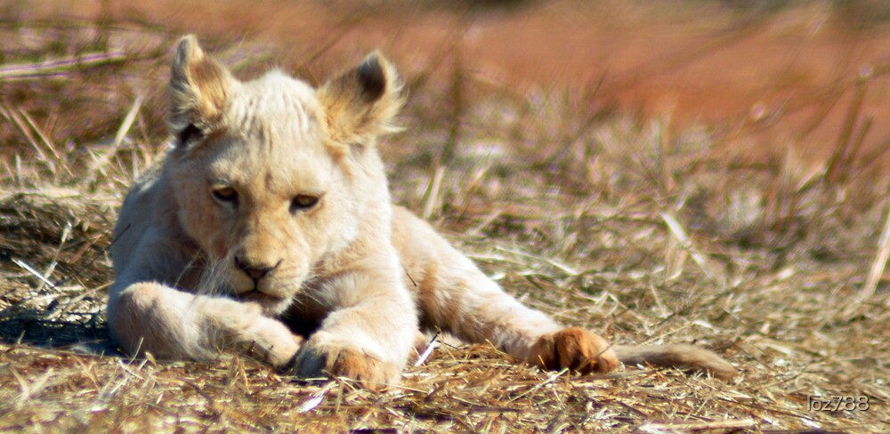Lion cub by loz788