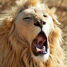 Lion yawn by loz788