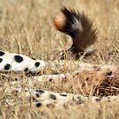 Cheetah paws & tail by loz788