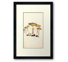 Coloured figures of English fungi or mushrooms James Sowerby 1809 0455 Framed Print