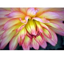 A Soft Touch! Photographic Print