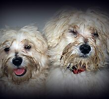 Sweet Little Faces by rduncan