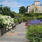 Queen Mother's Garden, RBG, Edinburgh, Scotland. by Dorothy Thomson