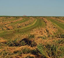 Making Hay by Barb Miller