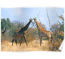 WHEN TWO FRIENDS MEET - the giraffe Poster